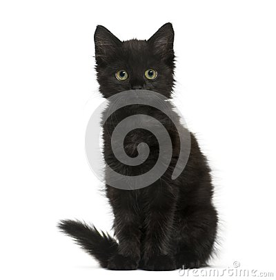 Free Black Cat Kitten Sitting And Looking At The Camera, Isolated On Royalty Free Stock Images - 105770129