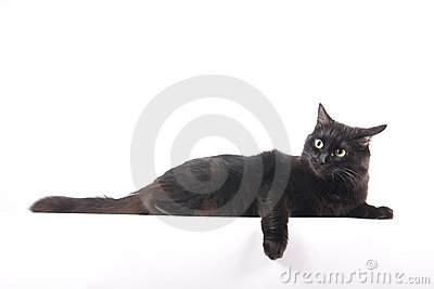 Black cat lie and relax isolated