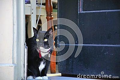 Black cat looking out door