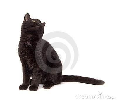 Black cat looking over its shoulder