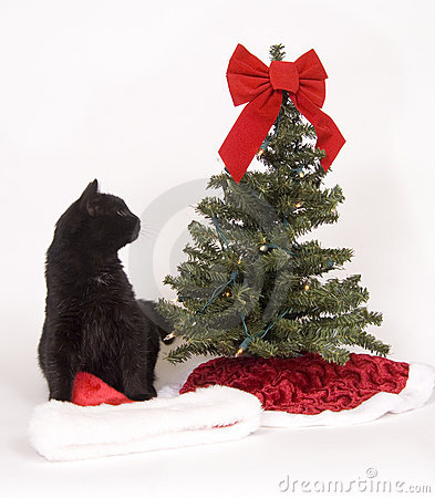 free black cat looks at christmas tree royalty free stock photo 1545385