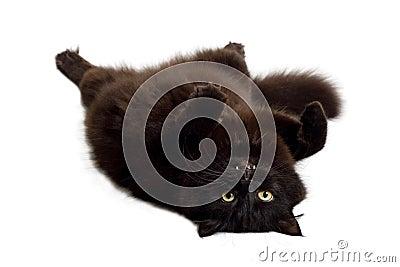 Black cat lying on it s back