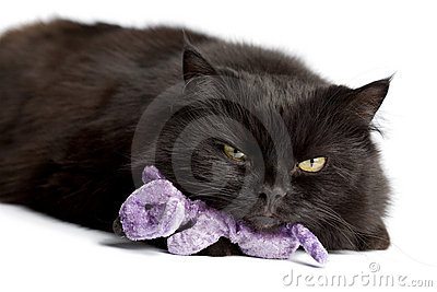 Black cat with mouse toy