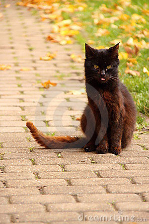 Free Black Cat On The Paving Stock Photography - 17526542