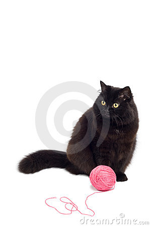 Black cat playing with pink clew