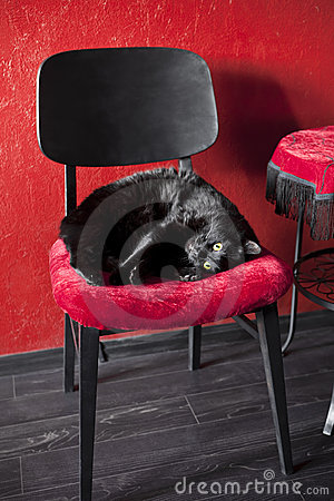 Black cat on a red chair