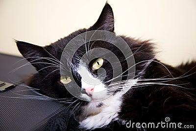Black cat rest over suitcase