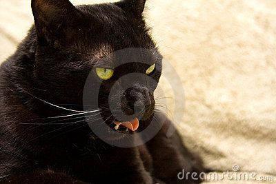 Black cat s face