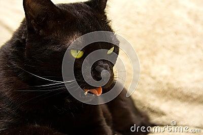 Black cat s face