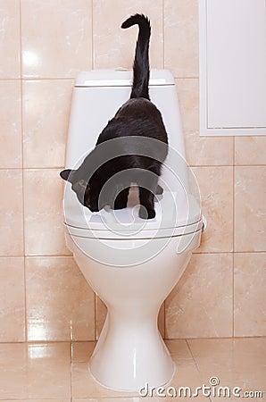 Black cat sitting on human toilet