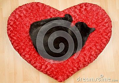 Black Cat Sleeping on a Pillow