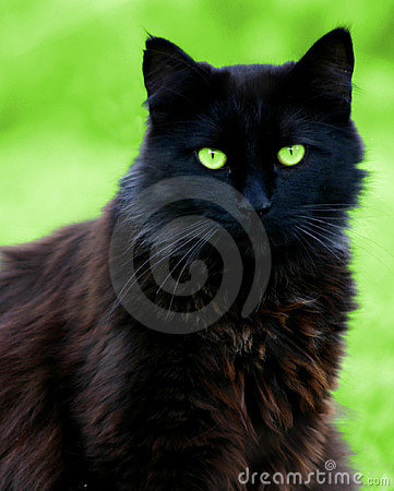 Free Black Cat Stare Stock Images - 227294