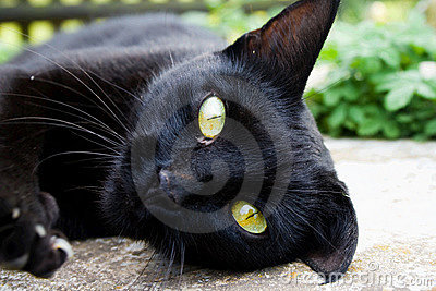 A black cat stares with yellow eyes