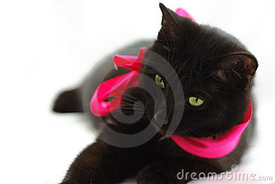 Black cat tied with a red bow isolated on white