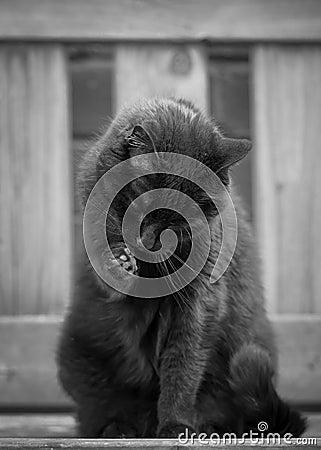 Free Black Cat Washing On Bench Stock Image - 54842741