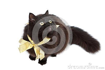 Black cat wearing golden bow isolated