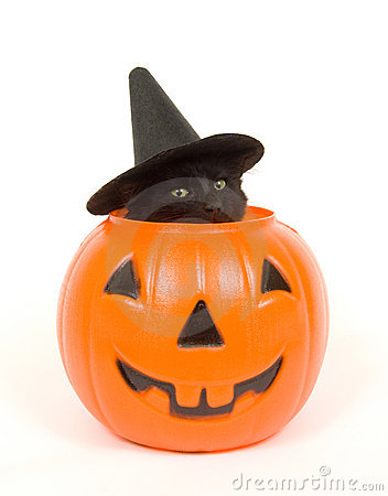Black cat with witch hat in jack o lantern