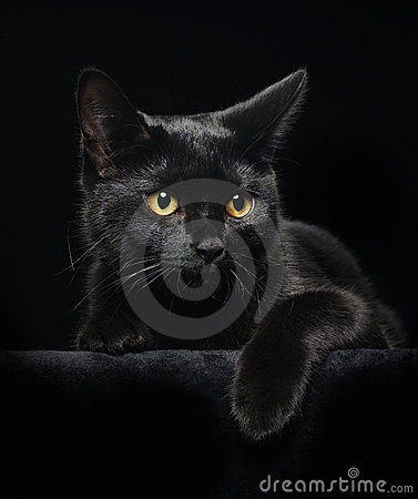 Free Black Cat With Yellow Eyes Royalty Free Stock Photo - 8341385