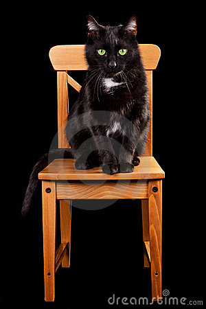Black cat on wooden chair