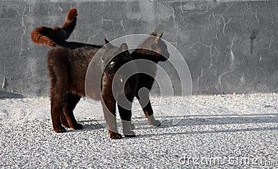 Black cats looking around