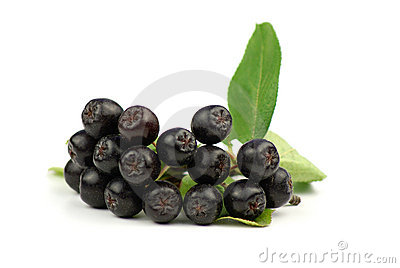 Black Chockeberries