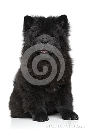 Free Black Chow Chow Puppy Royalty Free Stock Photo - 38385325