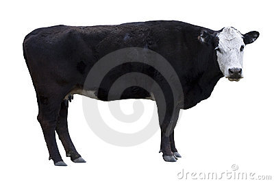 Black Cow cutout