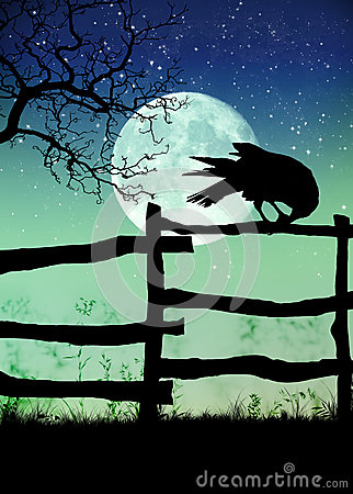 Black crow on the fence