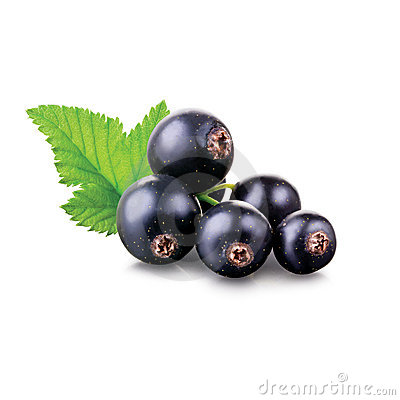 Free Black Currant Royalty Free Stock Images - 15445749
