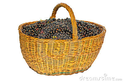 Black currant in a basket