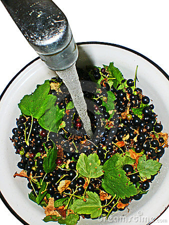 Black currant with leaves in a bowl under a water