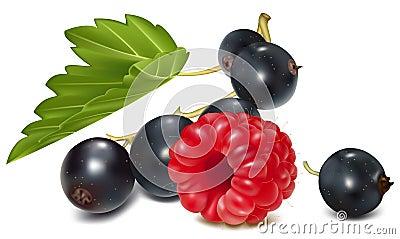 Black currant and ripe raspberry.