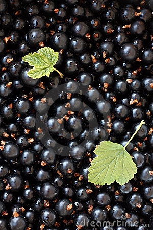 Black currants.