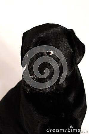 Free Black Dog Stock Photo - 19645970