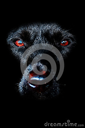 Free Black Dog Royalty Free Stock Photo - 48375025