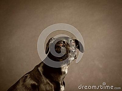 Black dog (59)