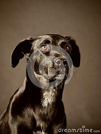 Black dog (58)