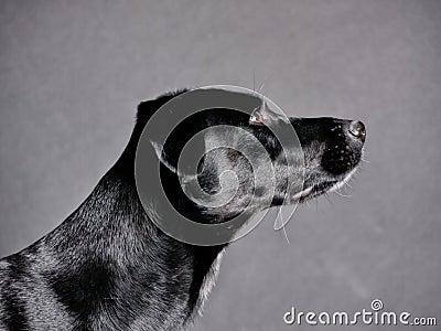 Black dog (77)