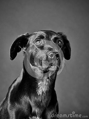 Black dog (66)