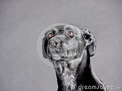 Black dog (91)