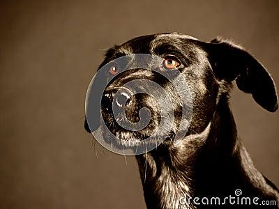 Black dog (88)
