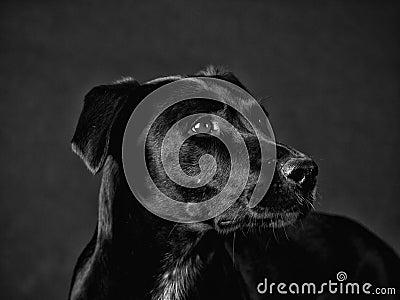 Black dog (75)
