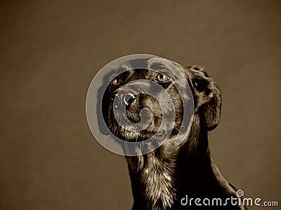 Black dog (95)