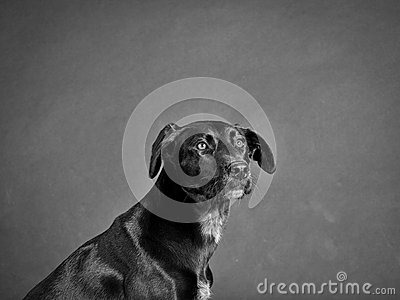 Black dog (87)