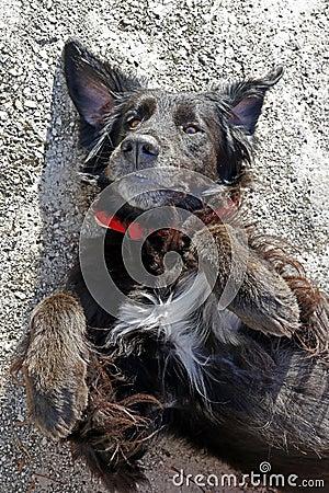 Free Black Dog Laying On The Gound Royalty Free Stock Image - 132664146