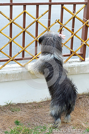 Black dog looking through the fence