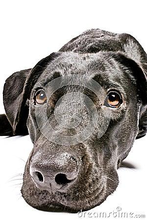 Free Black Dog Looking Sad Stock Photo - 3973330