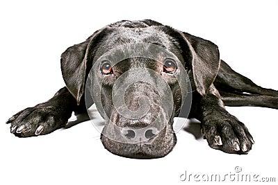 Black dog looking sad IV