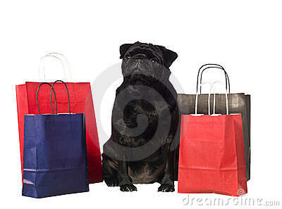 Black dog with shopping bags