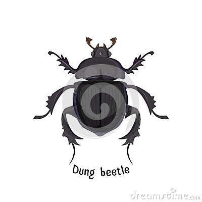 Free Black Dung Beetle That Has Strong Unpleasant Smell Stock Photography - 109821052